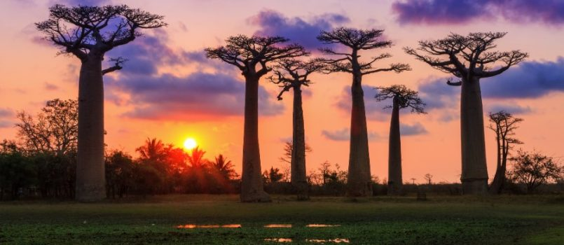 The Baobabs Paradise