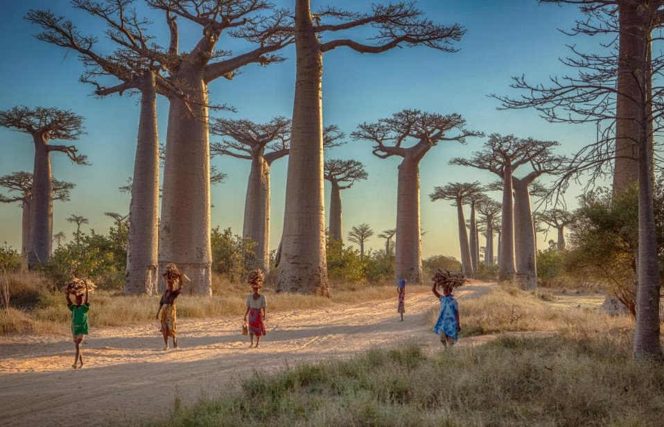 Things to Prepare before Traveling to Madagascar